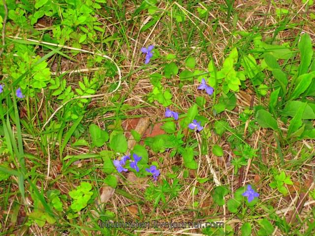 цветы_Финляндия