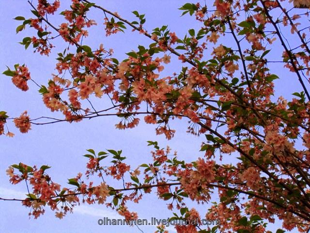 цветы_Италия