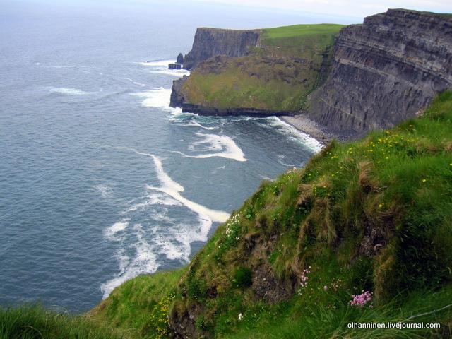 цветы_Ирландия, утесный пляж