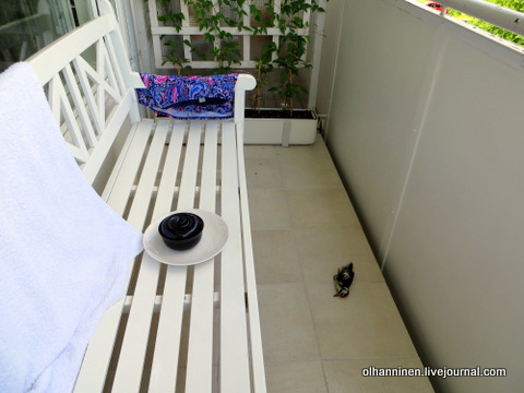 мертвый дятел на балконе