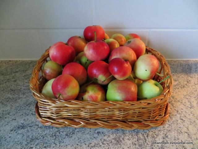 соседские яблоки