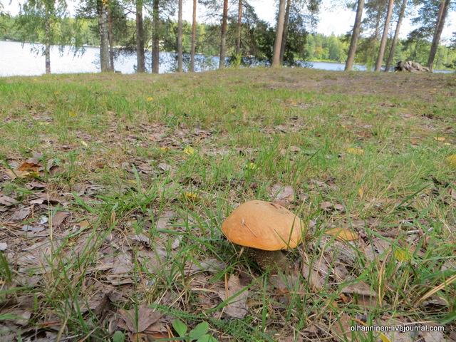 гриб у озера