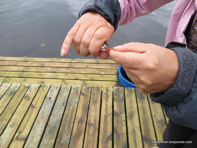 18 подруга учится снимать плотву с крючка