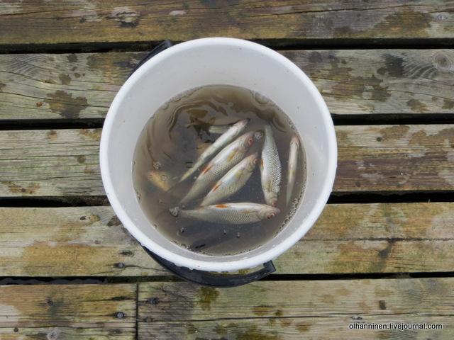 23 улов за полчаса рыбалки