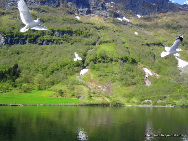 горы, чайки, фиорд