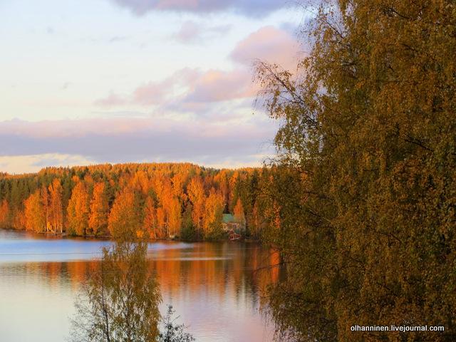 листья на закате