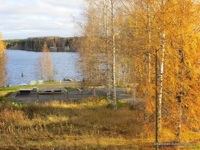листья опадают на рассвете