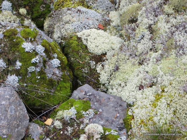 мох серый и зеленый на камнях