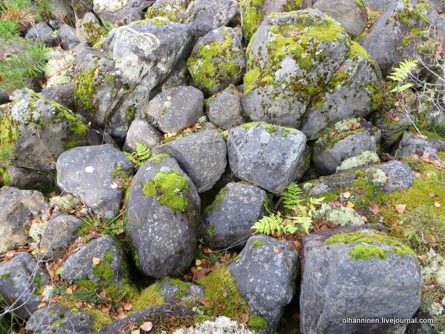 мох, камни, папоротник