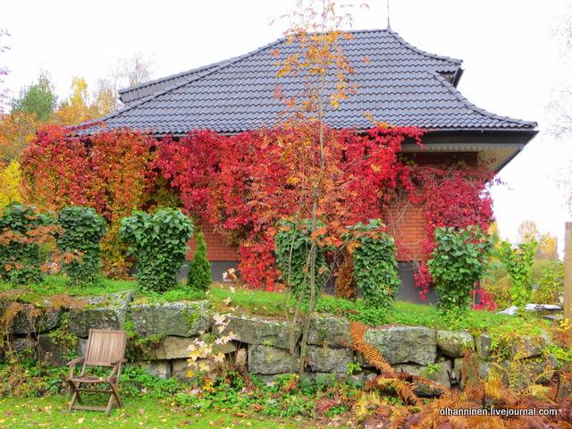 соседский дом в красном плюще