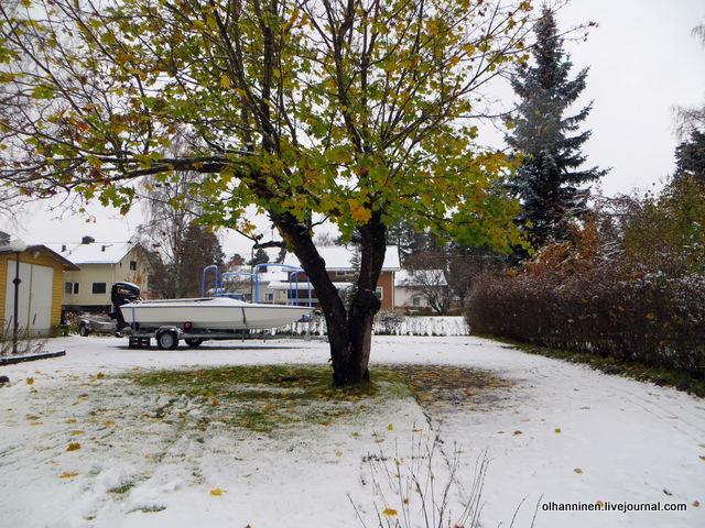 05 клен в снегу