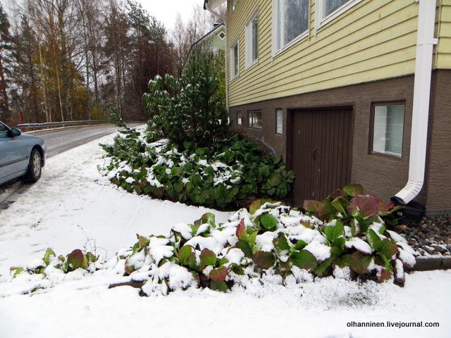 09 снег на растениях