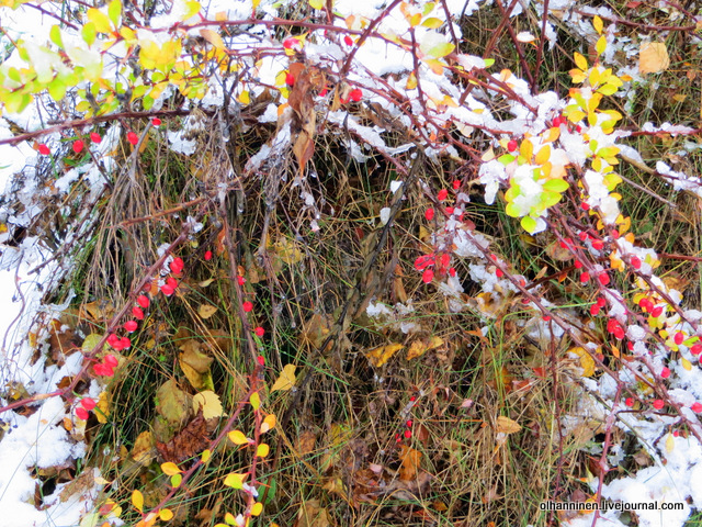 10 снег на ягодах