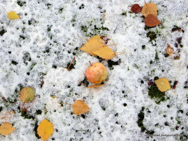 13 яблоки на снежной земле