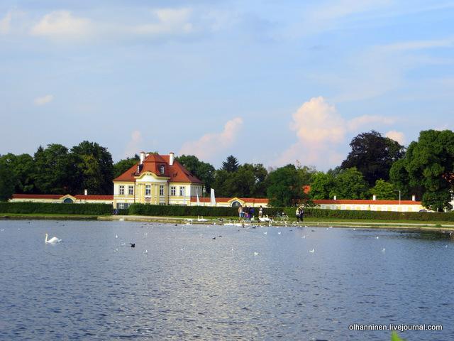 17 лебеди и утки в парке