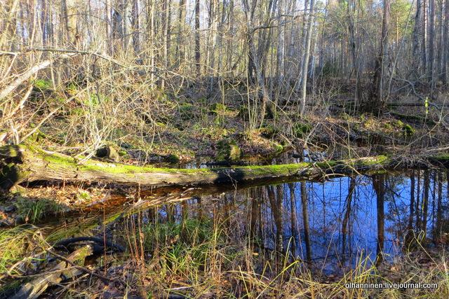 11 болото и замшелое дерево