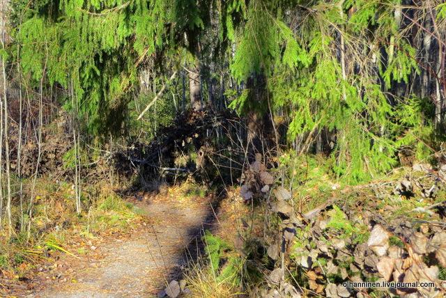 16 лесной шатер