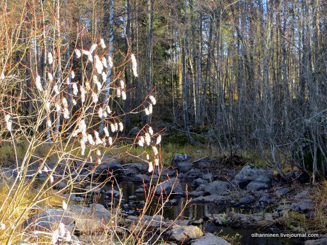 18 белые пушистые деревья