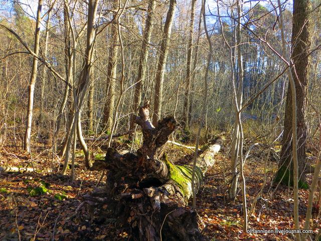 20 упавшее дерево
