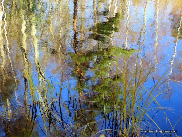26 отражение деревьев в озере