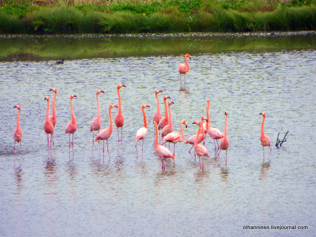 12flamingodance