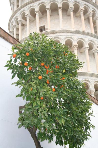 италия весна 2013 292