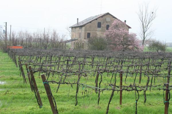 италия весна 2013 369