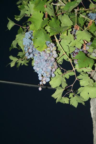 италия осень 2013  (364)