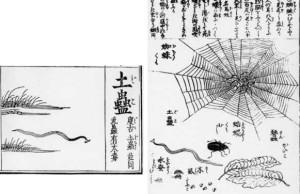 Bipaliidae Japan