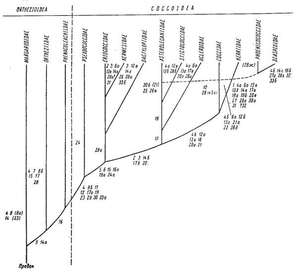 данциг 1980
