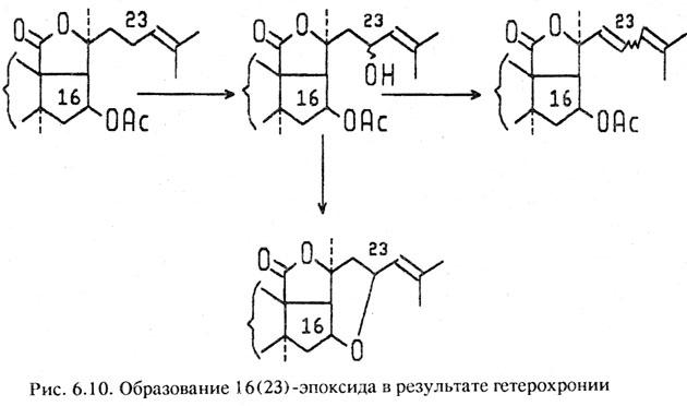 bioch holothur2