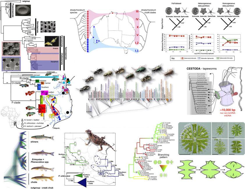 varia cladograms