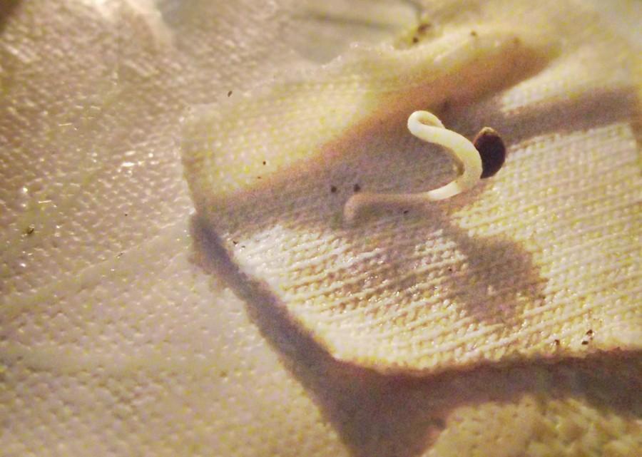Сперма из стаканчика фото 21 фотография