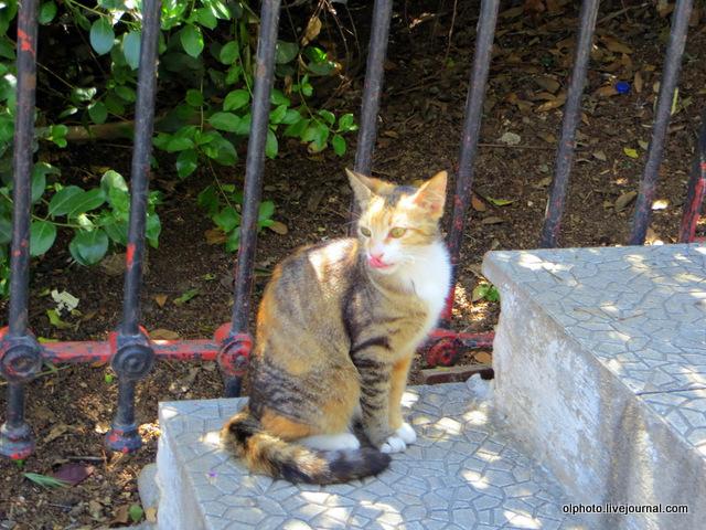 25 кошка на ступеньках