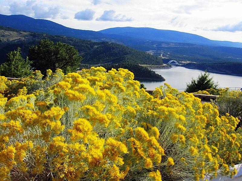 Как радует глаз резкий контраст синего озера и желтых цветов