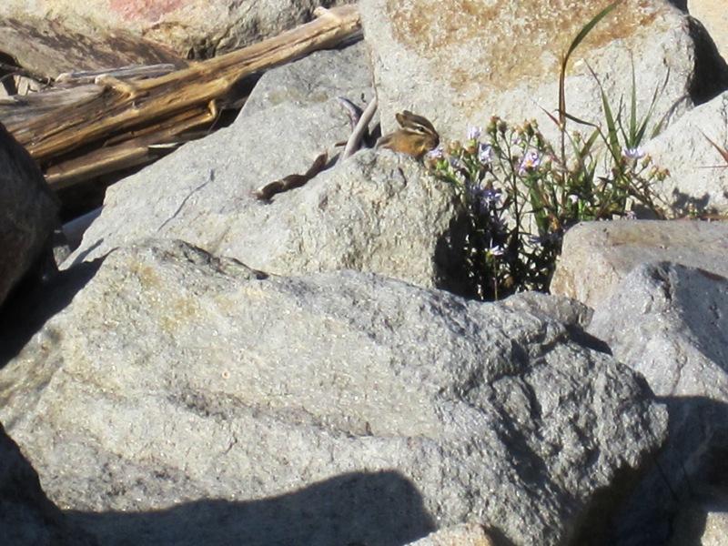 Иногда животное пряталось за камнями