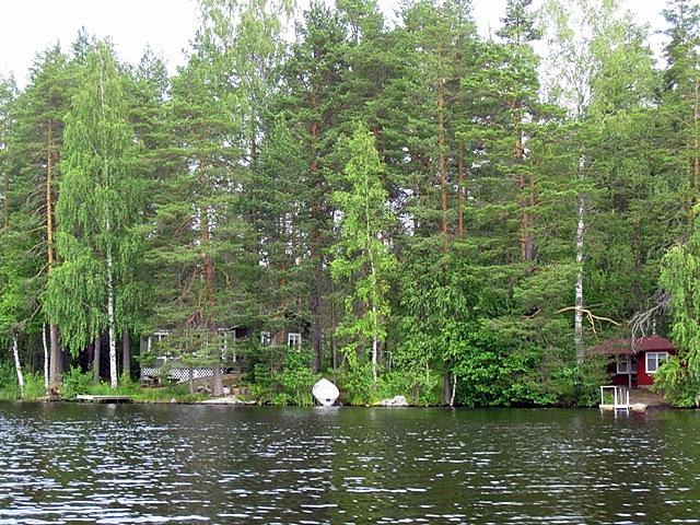 Очень часто на побережье строители сохраняют деревья или высаживают новые