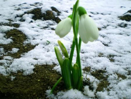 Весна 8