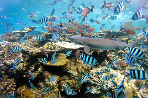 beqa-reef-diving-900x900.jpg
