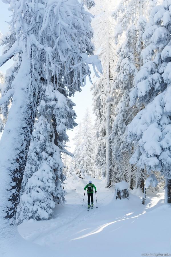 после двухдневного снегопада знакомый лес