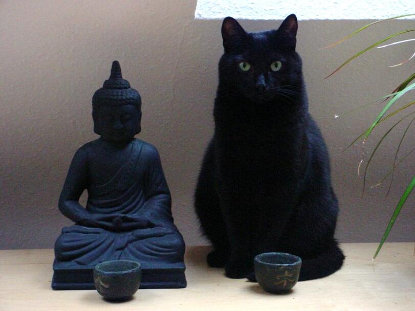 art-красивые-картинки-будда-котейка-1450063
