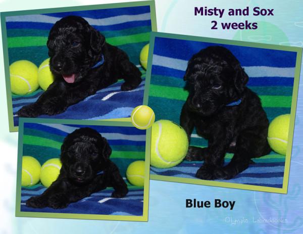 Blue Boy 2 week Collagewatermark.jpg