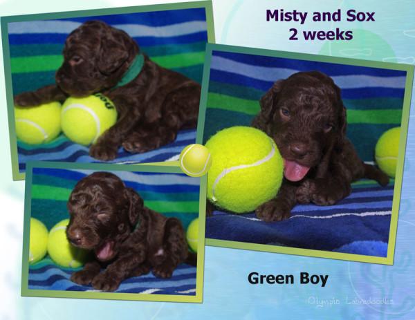Green Boy 2 week Collagewatermark.jpg