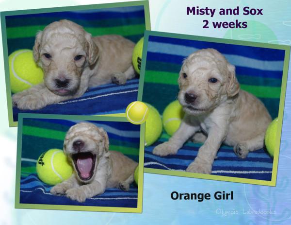 Orange Girl 2 week Collagewatermark.jpg