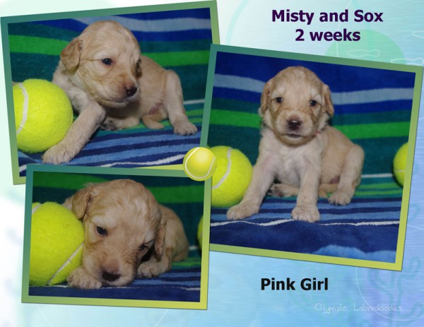 Pink Girl 2 week Collagewatermark.jpg