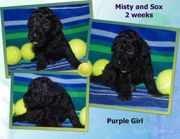 Purple Girl 2 week Collagewatermark.jpg