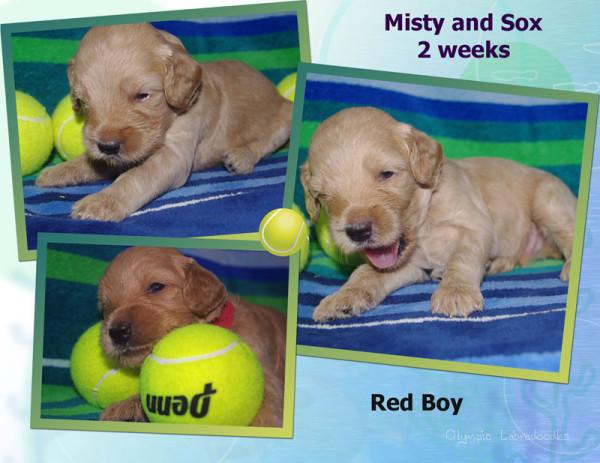 Red Boy 2 week Collagewatermark.jpg