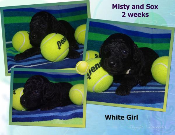 White Girl 2 week Collagewatermark.jpg