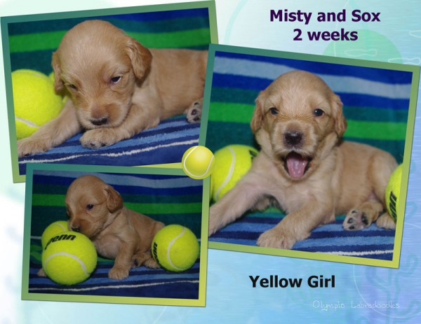 Yellow Girl 2 week Collagewatermark.jpg