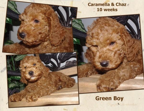 Green Boy 10 week Collagewatermark.jpg